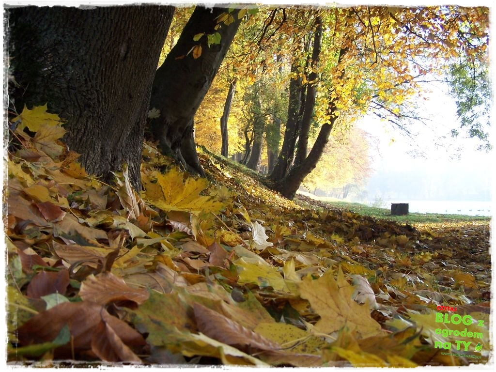 jesien_zogrodemnaty1
