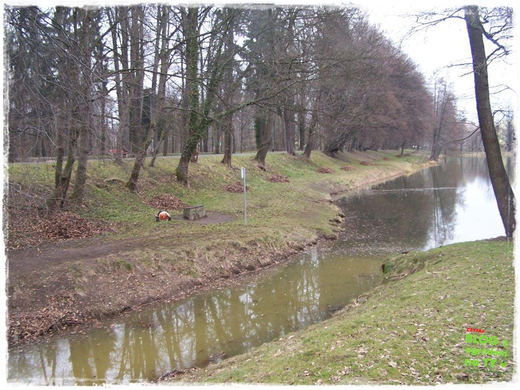 Park Miejski w Nysie zogrodemnaty13