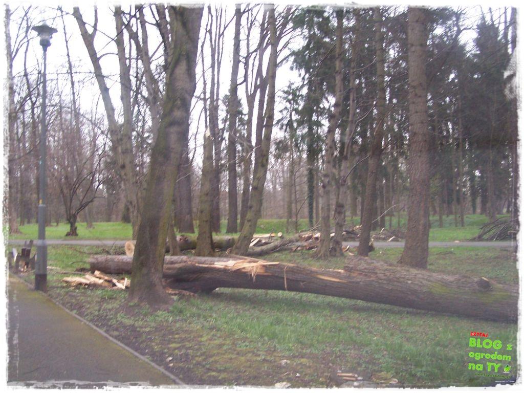 Park Miejski w Nysie zogrodemnaty19
