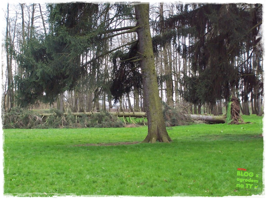 Park Miejski w Nysie zogrodemnaty20