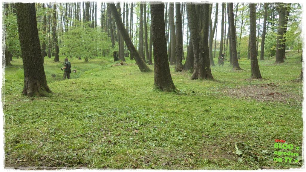 Park Miejski w Nysie zogrodemnaty27