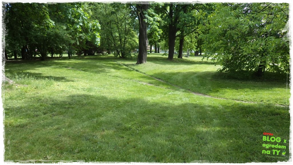 Park Miejski w Nysie zogrodemnaty28