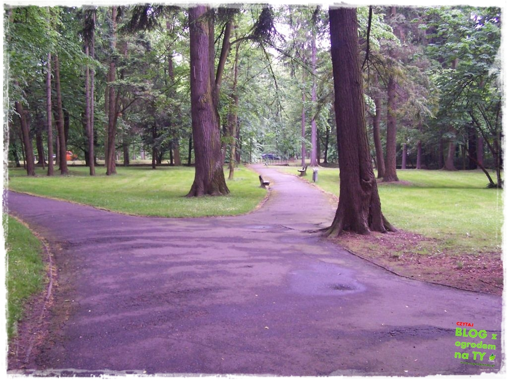 Park Miejski w Nysie zogrodemnaty31