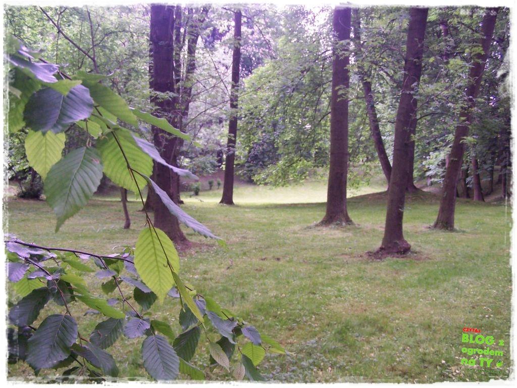 Park Miejski w Nysie zogrodemnaty33