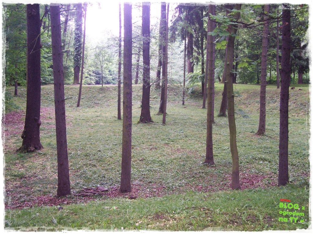 Park Miejski w Nysie zogrodemnaty34