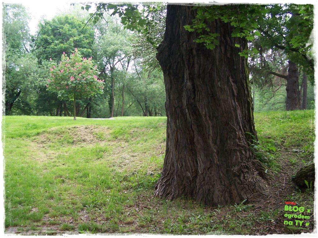 Park Miejski w Nysie zogrodemnaty35