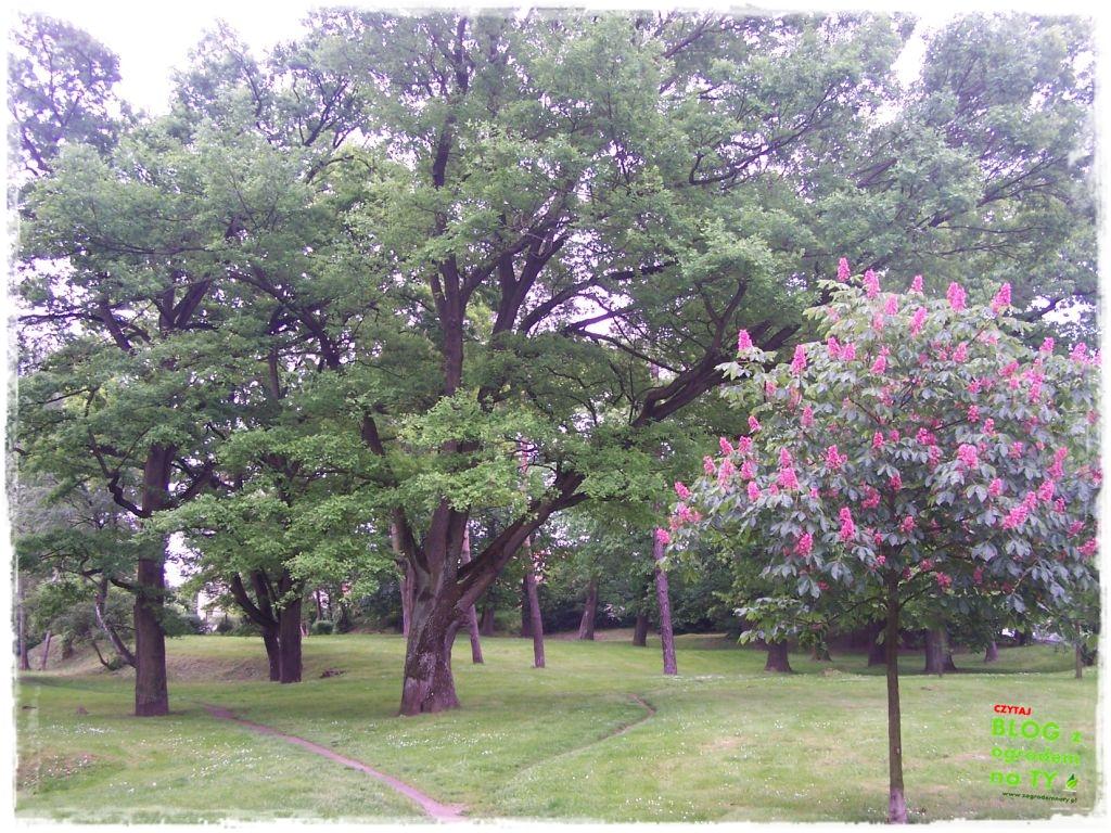 Park Miejski w Nysie zogrodemnaty37