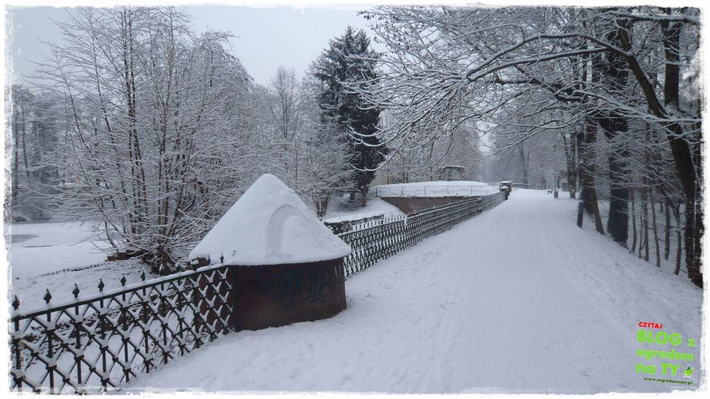 Park Miejski w Nysie zogrodemnaty4