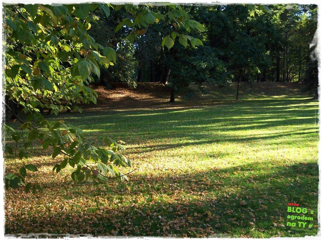 Park Miejski w Nysie zogrodemnaty48