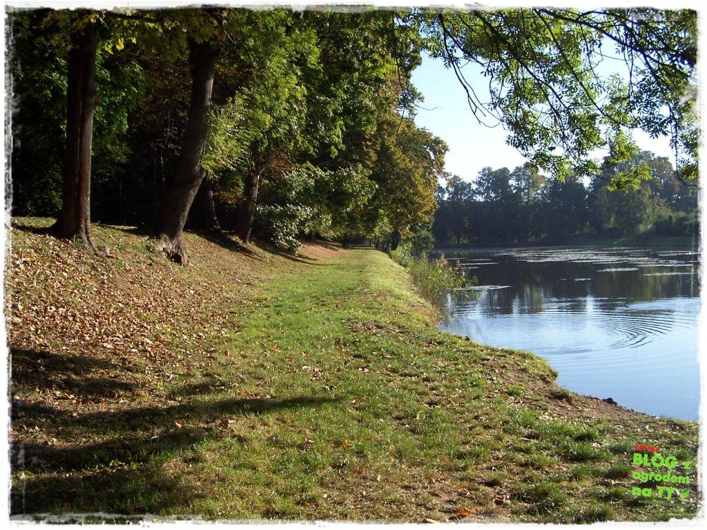 Park Miejski w Nysie zogrodemnaty49