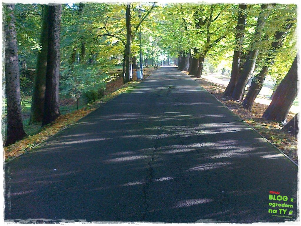 Park Miejski w Nysie zogrodemnaty52