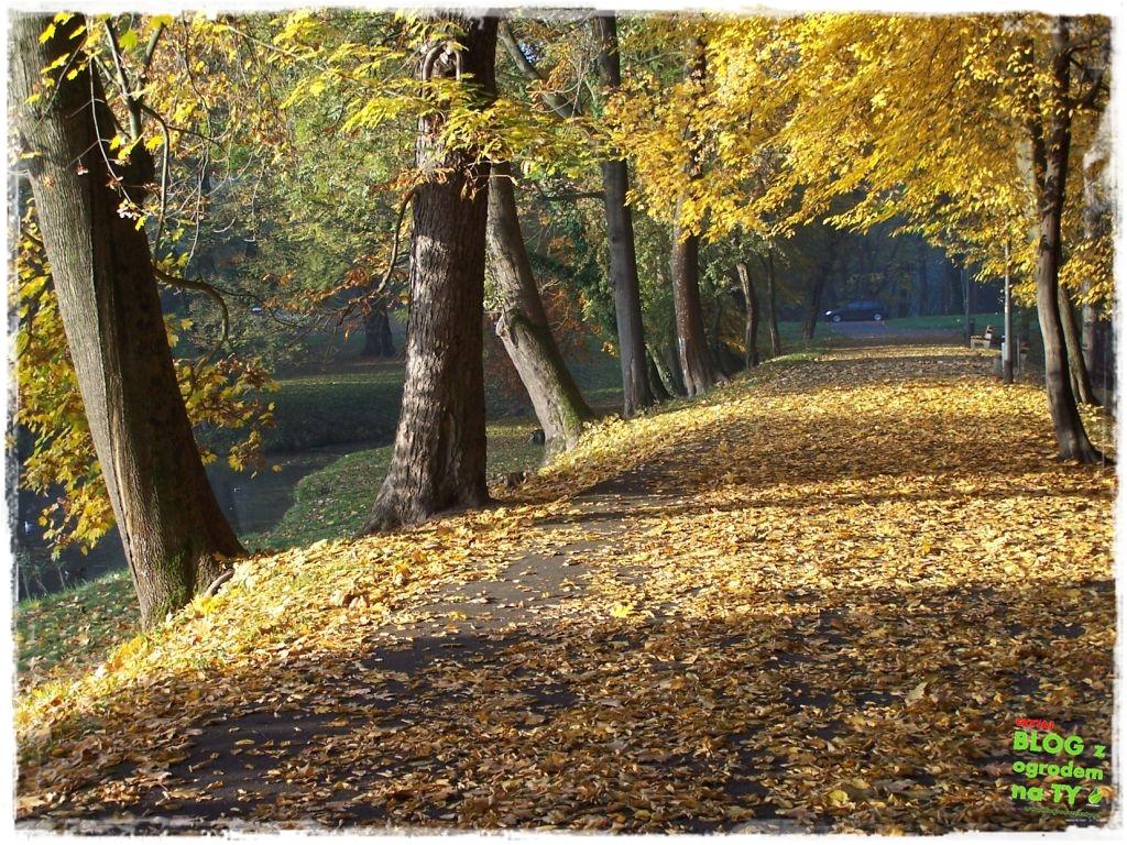 Park Miejski w Nysie zogrodemnaty54