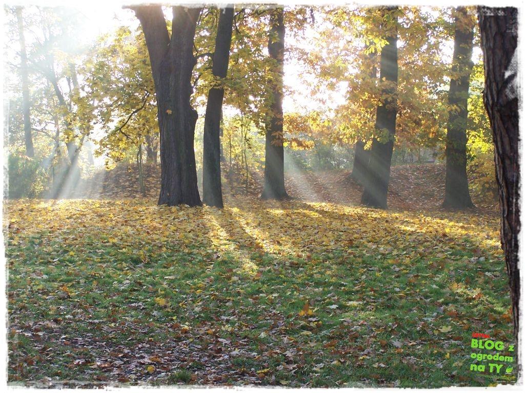 Park Miejski w Nysie zogrodemnaty58