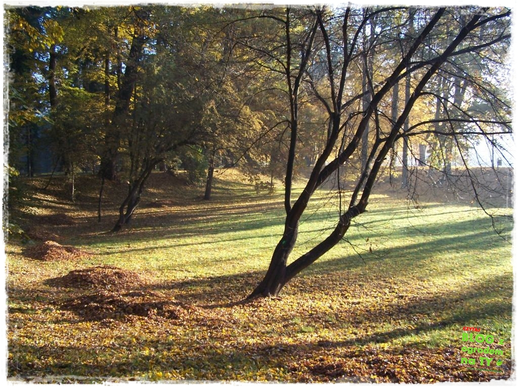 Park Miejski w Nysie zogrodemnaty59
