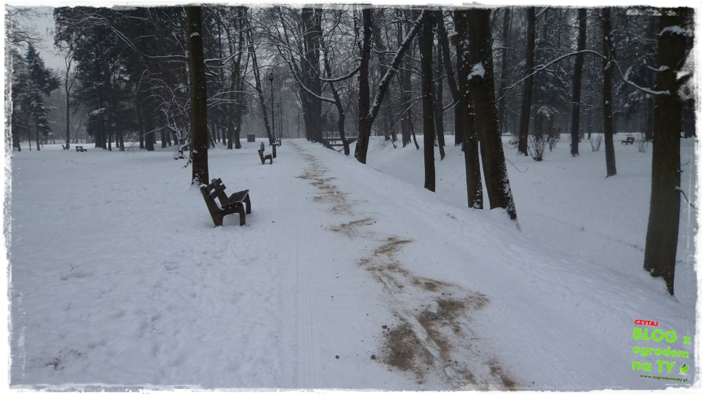 Park Miejski w Nysie zogrodemnaty6
