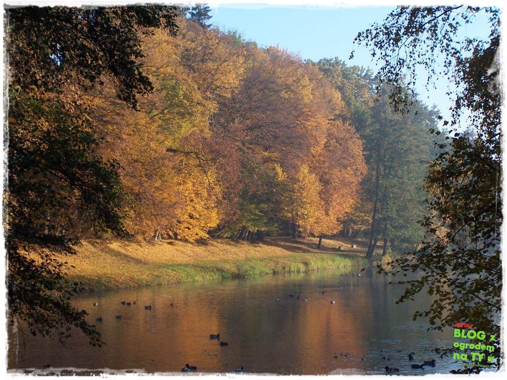 Park Miejski w Nysie zogrodemnaty63