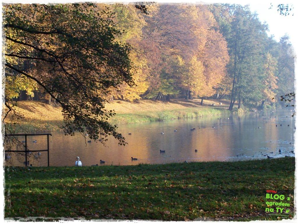 Park Miejski w Nysie zogrodemnaty64