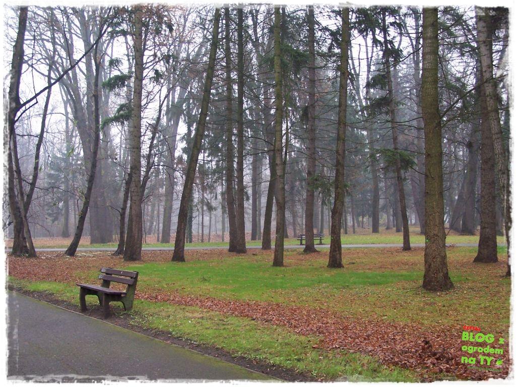 Park Miejski w Nysie zogrodemnaty76
