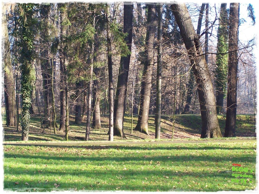 Park Miejski w Nysie zogrodemnaty80