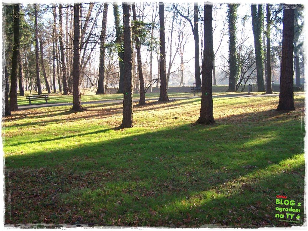 Park Miejski w Nysie zogrodemnaty84