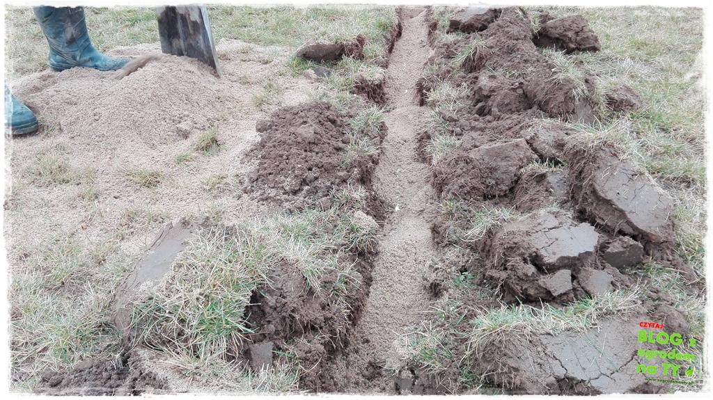 jak urządzić ogród zogrodemnaty20