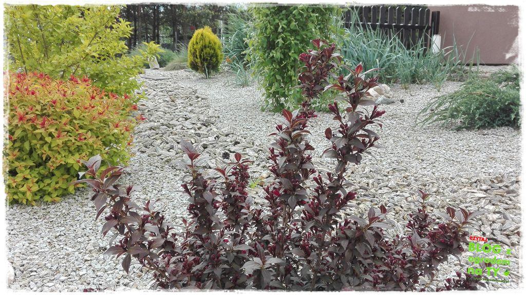 mój ogród zogrodemnaty17
