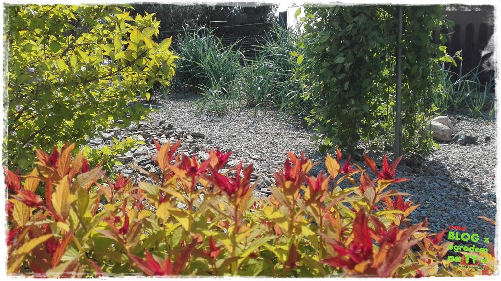 mój ogród zogrodemnaty2