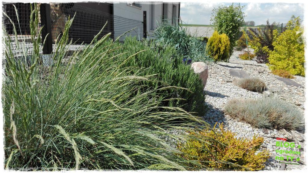 mój ogród zogrodemnaty3