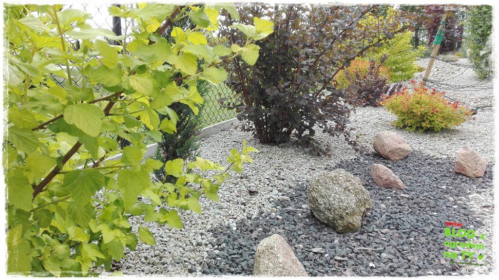 mój ogród zogrodemnaty13