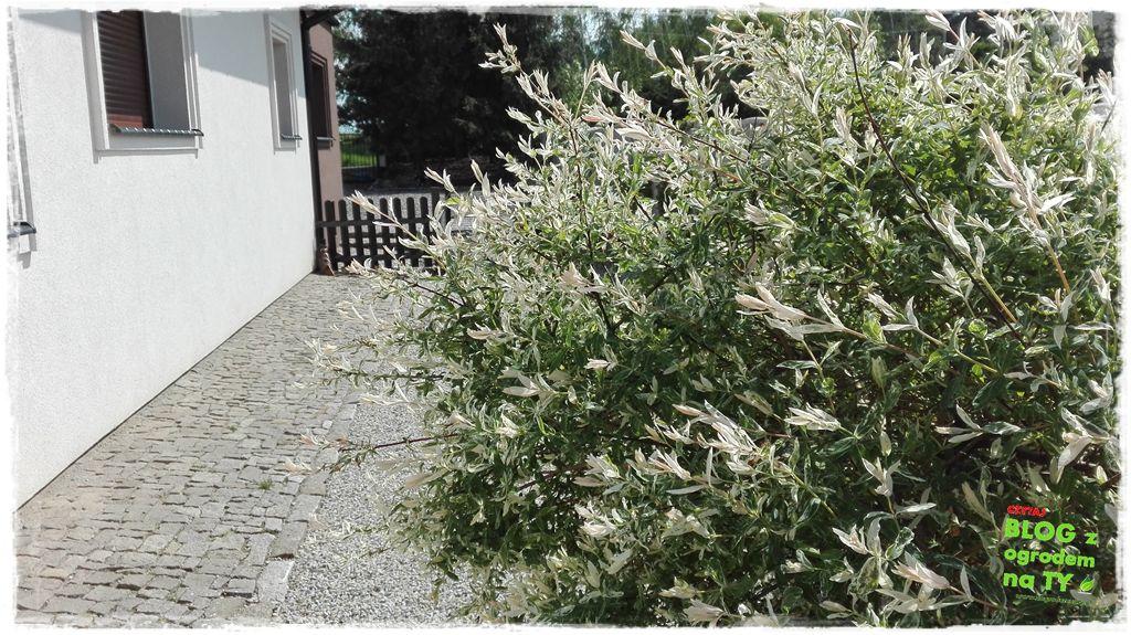 mój ogród zogrodemnaty5