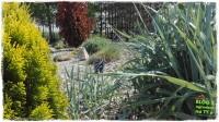 mój ogród zogrodemnaty1