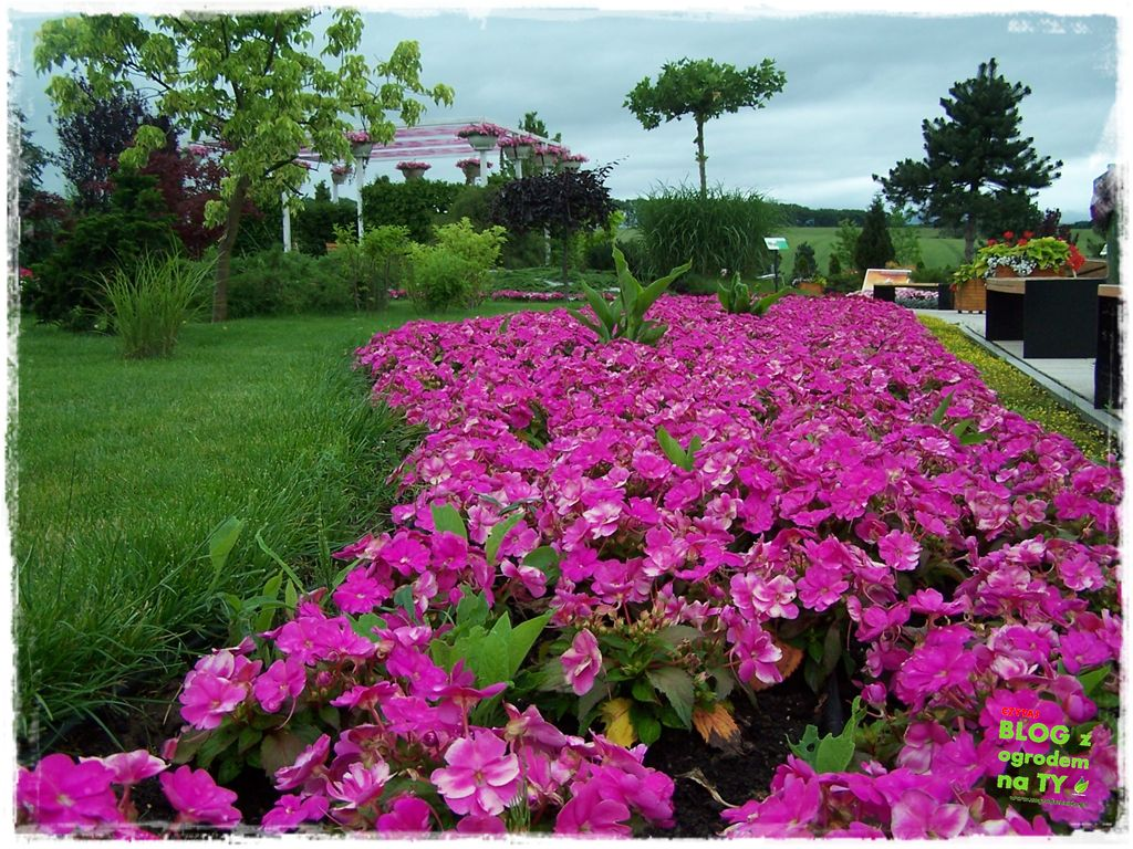 minieuroland festiwal kwiatów zogrodemnaty9