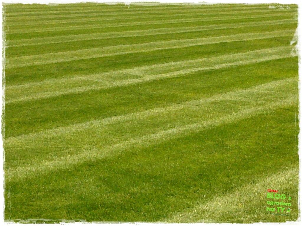 jak kosić trawnik zogrodemnaty33