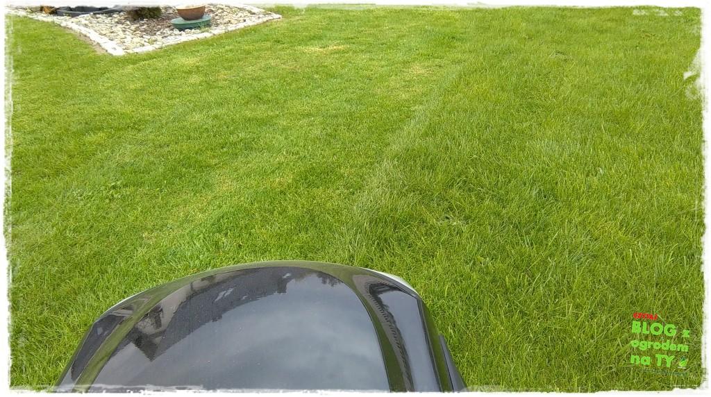 jak kosić trawnik zogrodemnaty4