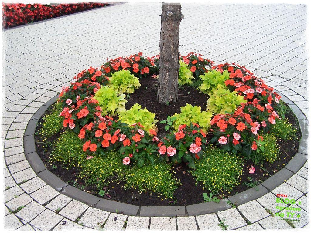 minieuroland festiwal kwiatów zogrodemnaty18