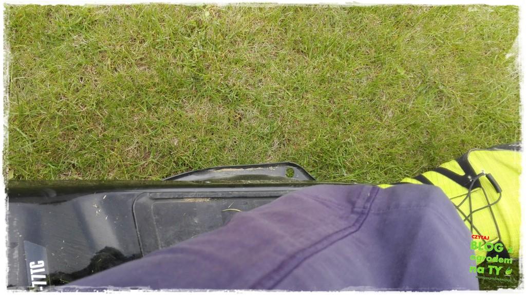jak kosić trawnik zogrodemnaty6