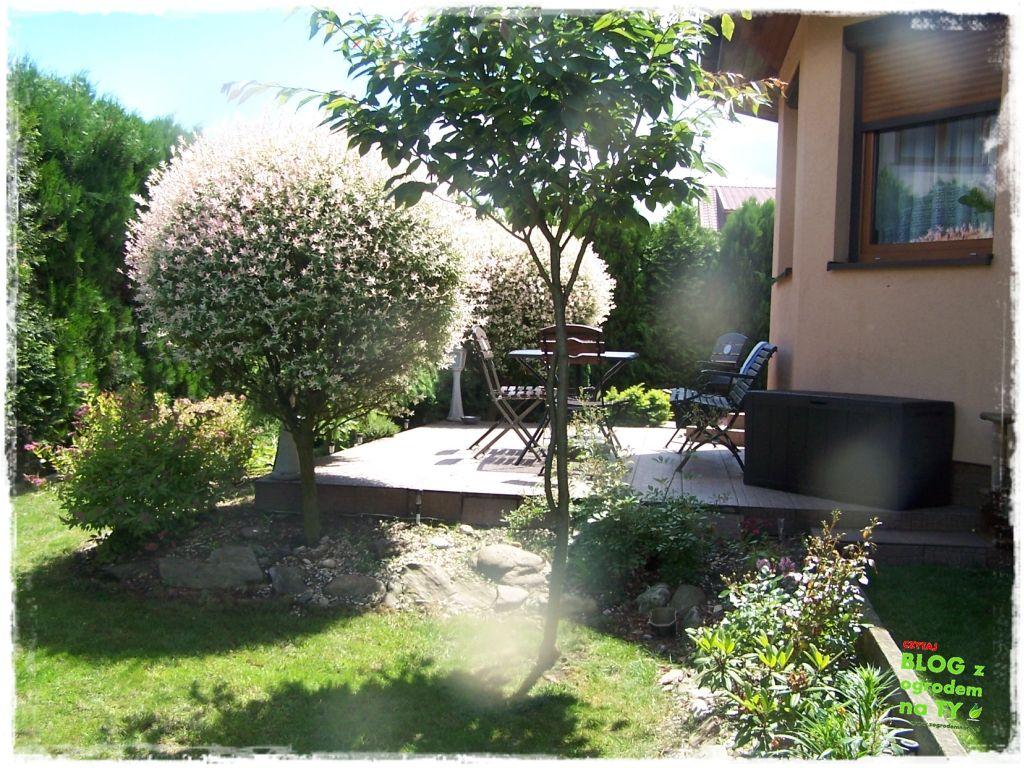 taras w ogrodzie zogrodemnaty10