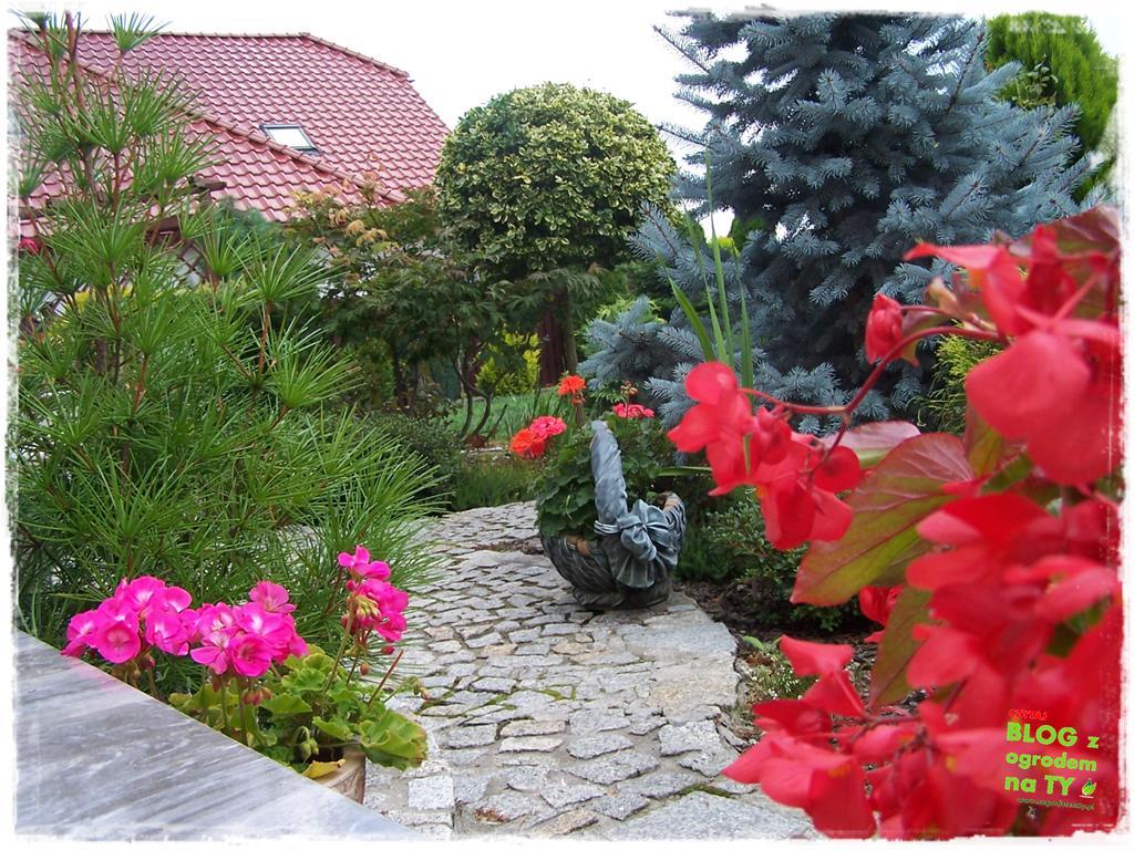 Ogród z dużą ilością gatunków zogrodemnaty6