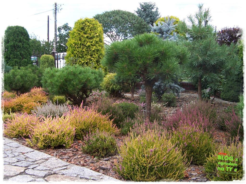 Ogród z dużą ilością gatunków zogrodemnaty9