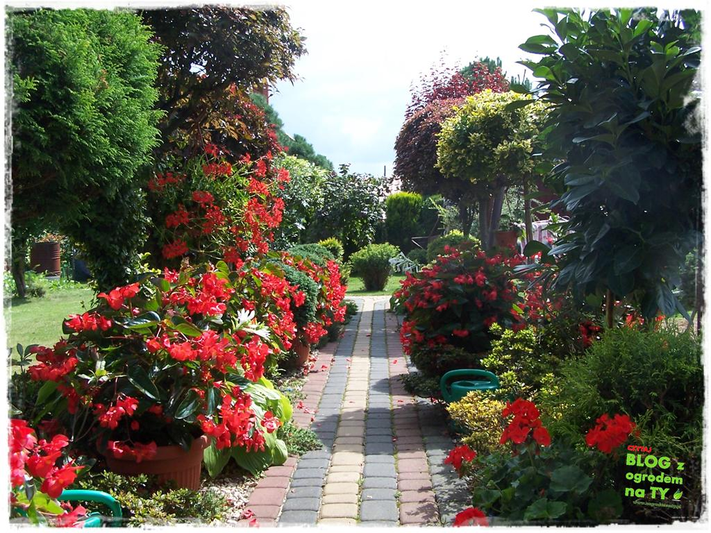 Ogród z dużą ilością gatunków zogrodemnaty31
