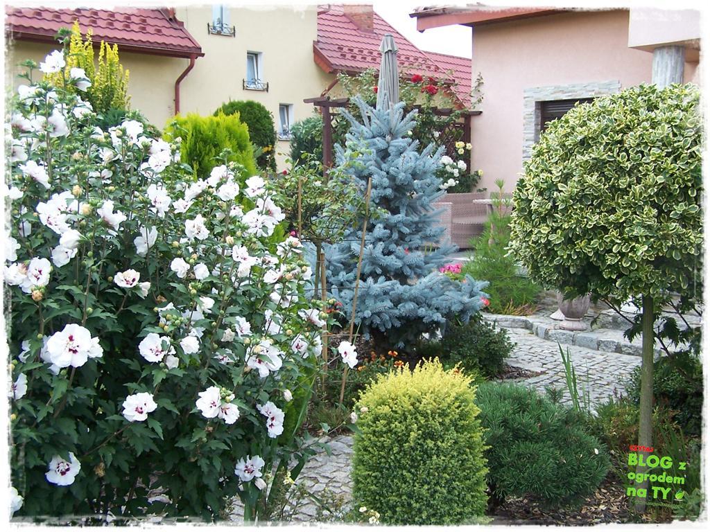 Ogród z dużą ilością gatunków zogrodemnaty3