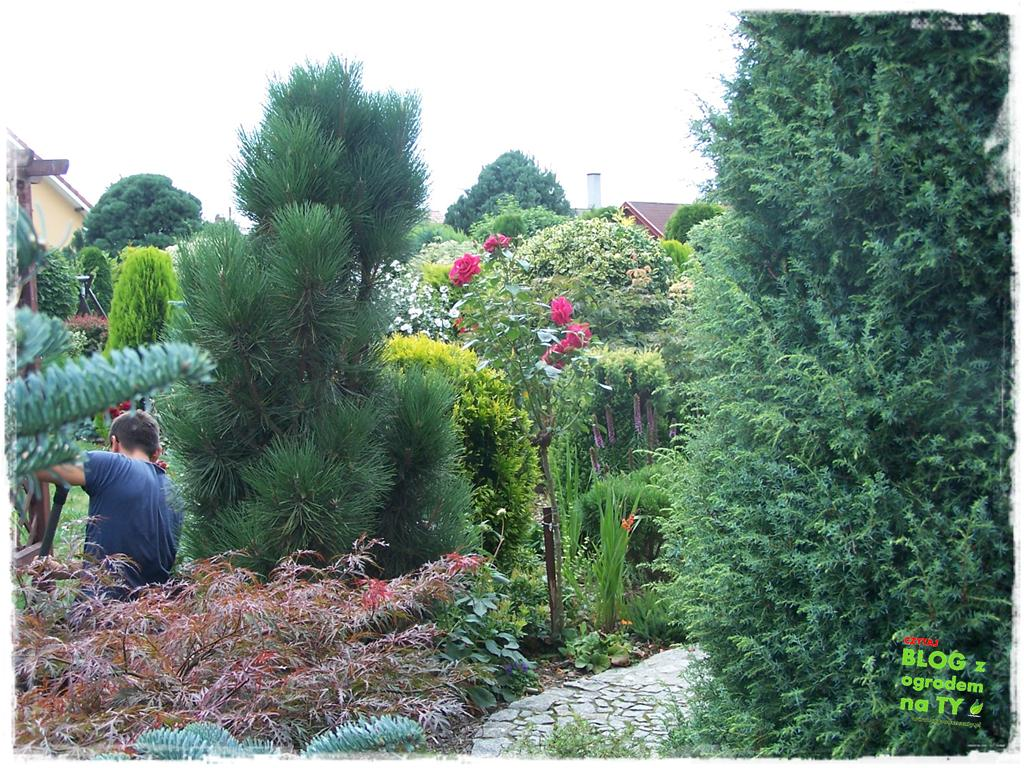 Ogród z dużą ilością gatunków zogrodemnaty16