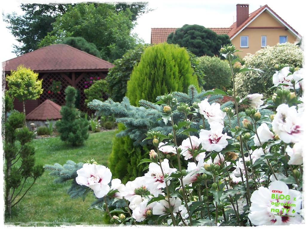 Ogród z dużą ilością gatunków zogrodemnaty22