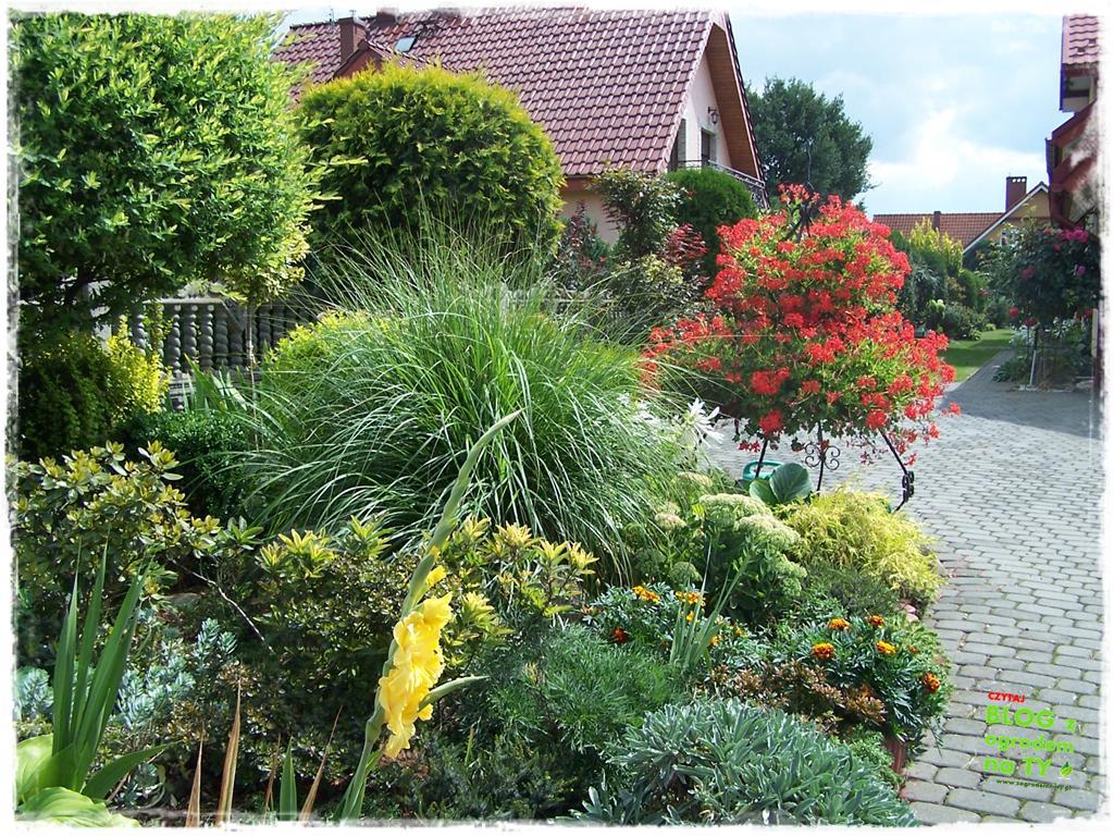 Ogród z dużą ilością gatunków zogrodemnaty35