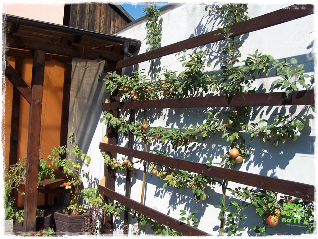 ogród po polsku zogrodemnaty29