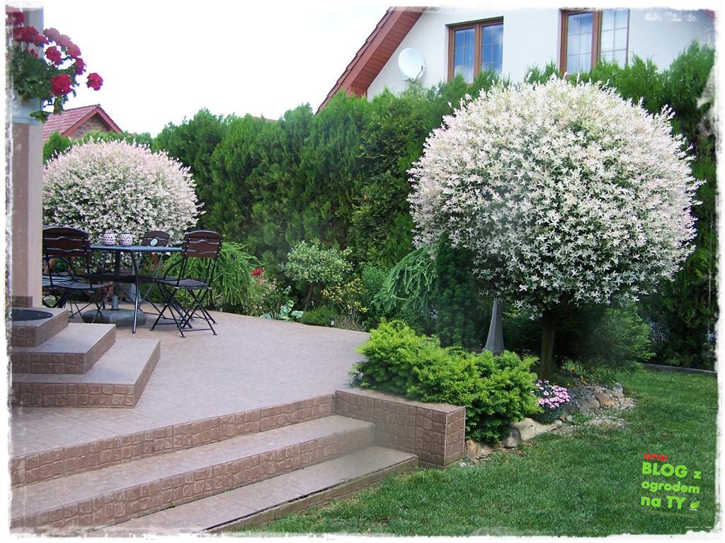 ogród po polsku zogrodemnaty46