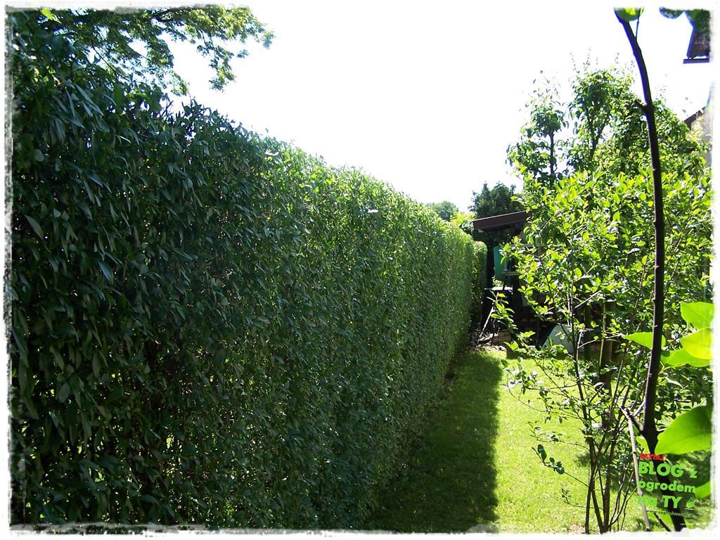 ogród po polsku zogrodemnaty14