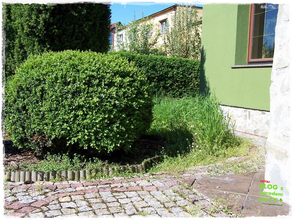 ogród po polsku zogrodemnaty41