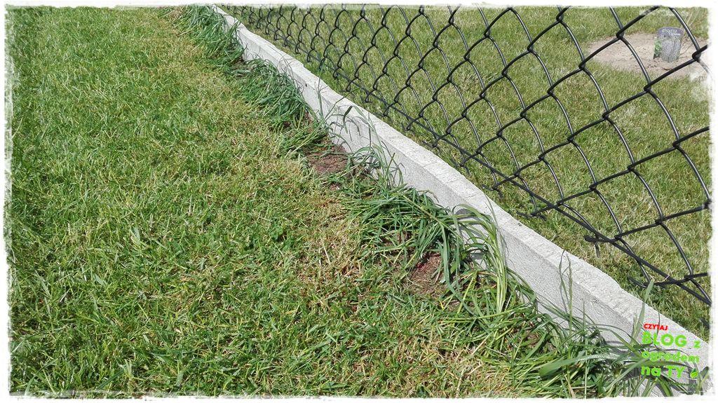 jesienna pielęgnacja trawnika zogrodemnaty7