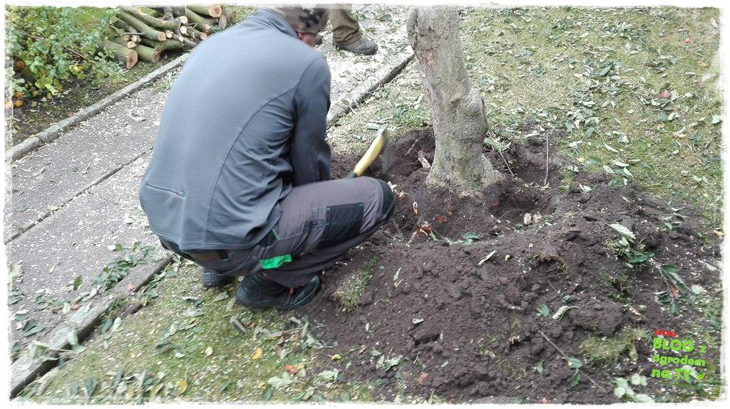 jak wyciąć drzewo zogrodemnaty15